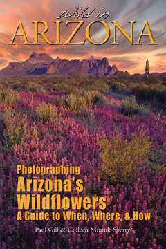 Wild In Arizona, Photographing Arizona's Wildflowers