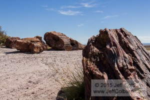 Petrified Forest0102