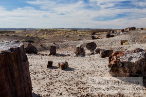 Petrified Forest0245