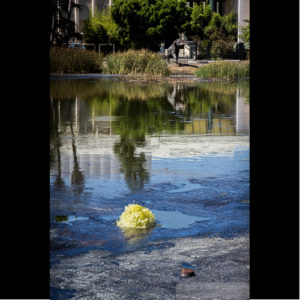 Photo - La Brea Tar Pits