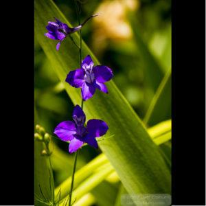 Pretty Flower - PLANT0817