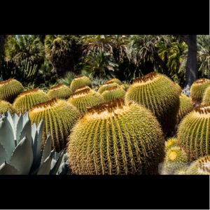 Cactus - Huntington Library-0119