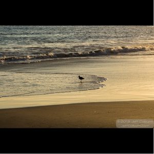 Laguna Beach-0144