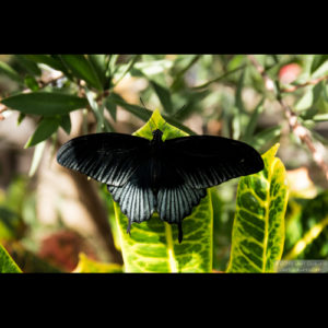 ButterflyWonderland-0297
