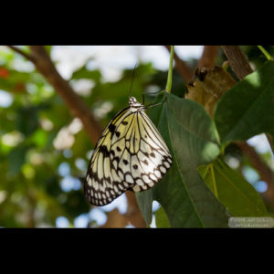 ButterflyWonderland-0285