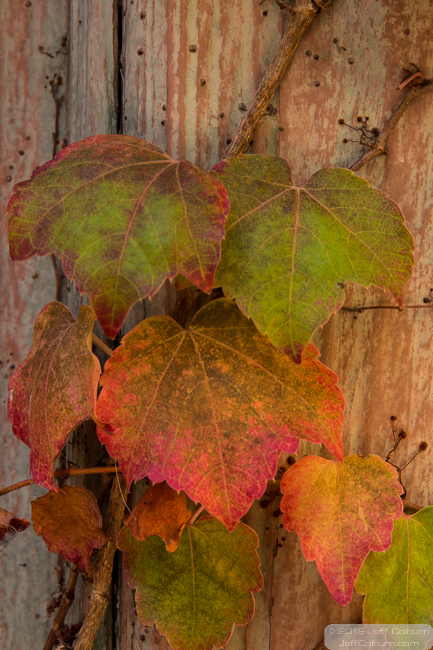 Fall colors at La Pasada, Winslow