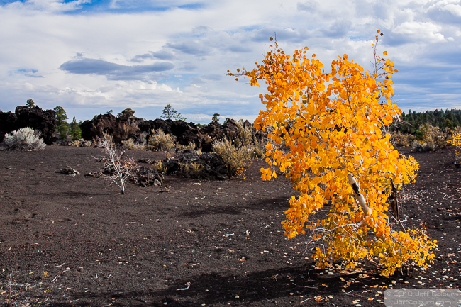 fall colors at Sunset Crater